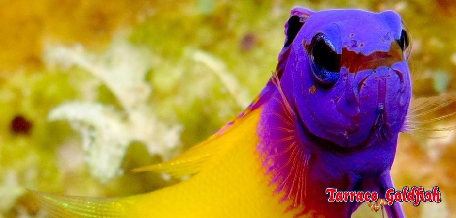 http://www.tarracogoldfish.com/wp-content/uploads/2013/09/gramma-loreto31.jpg