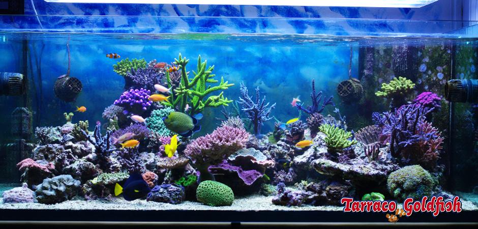 acuario marino 1 TarracoGoldfish